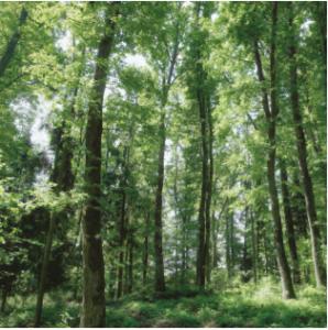 Les avantages du bois se chauffer au bois le bois energie - Se chauffer au bois ...